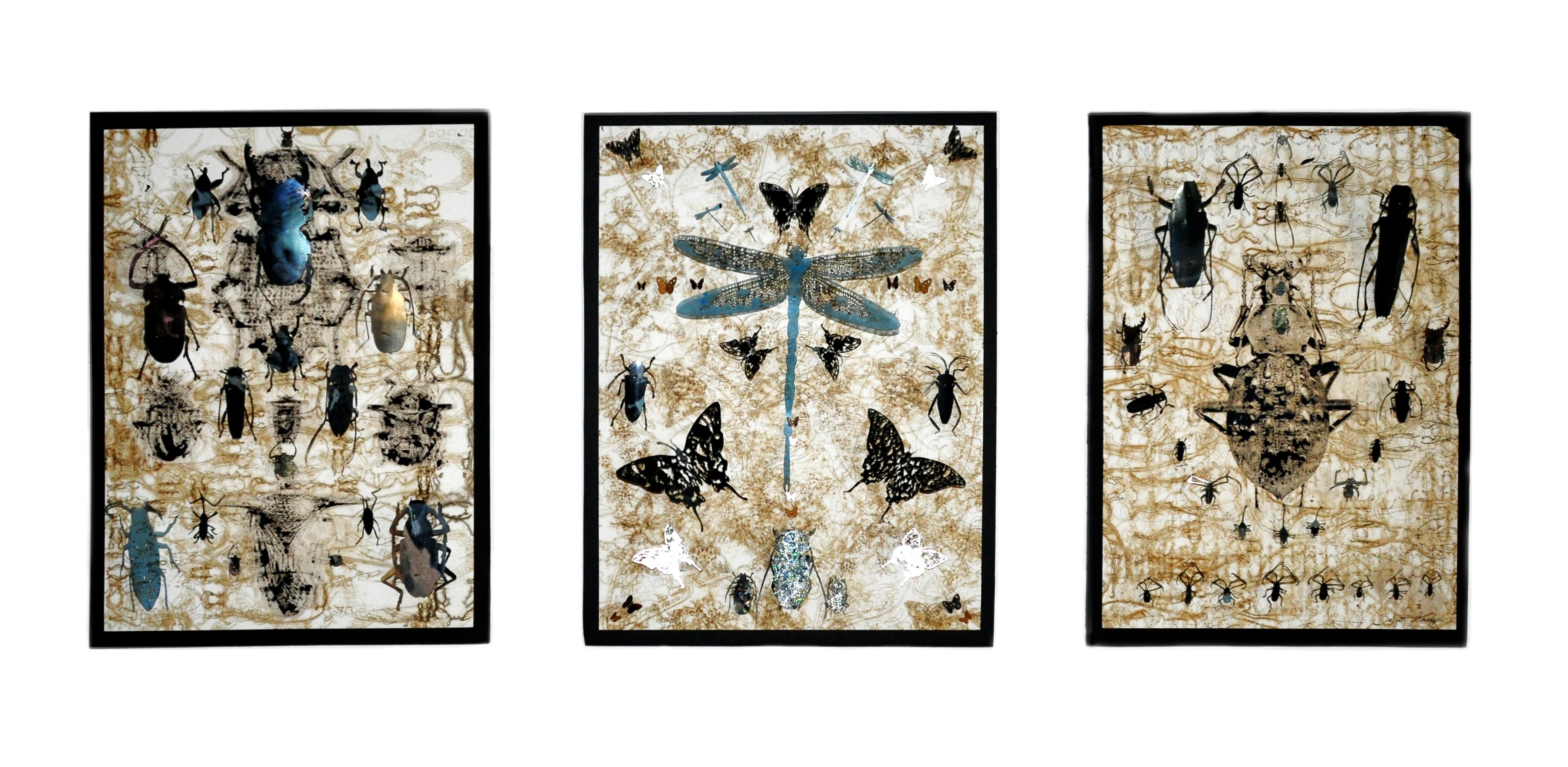 B-Amarger_artiste_2018_entomologiste-865-tableaux-face