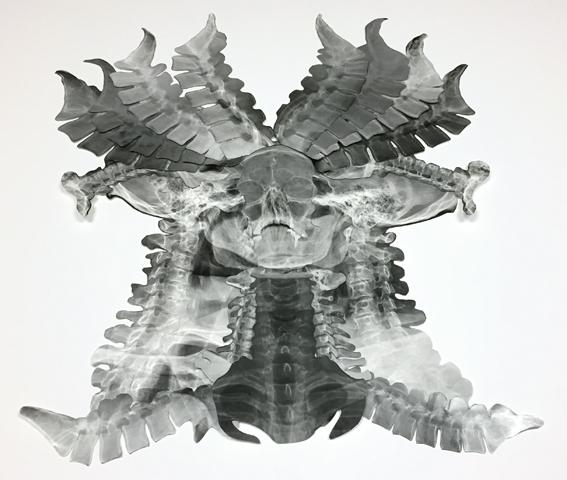 Viroflay_anatomie-_sacrumitor-